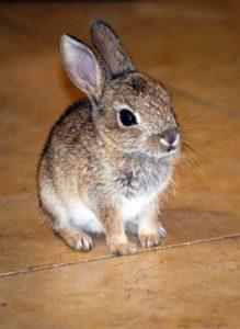Имена для декоративных кроликов девочек