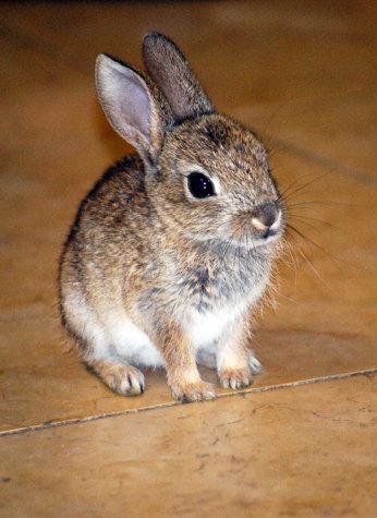 красивые имена для кроликов