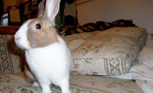 Имена для кроликов девочек
