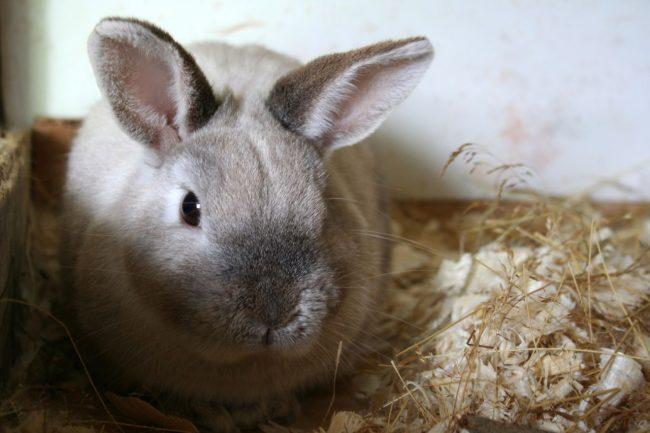 Самые лучшие имена для кроликов