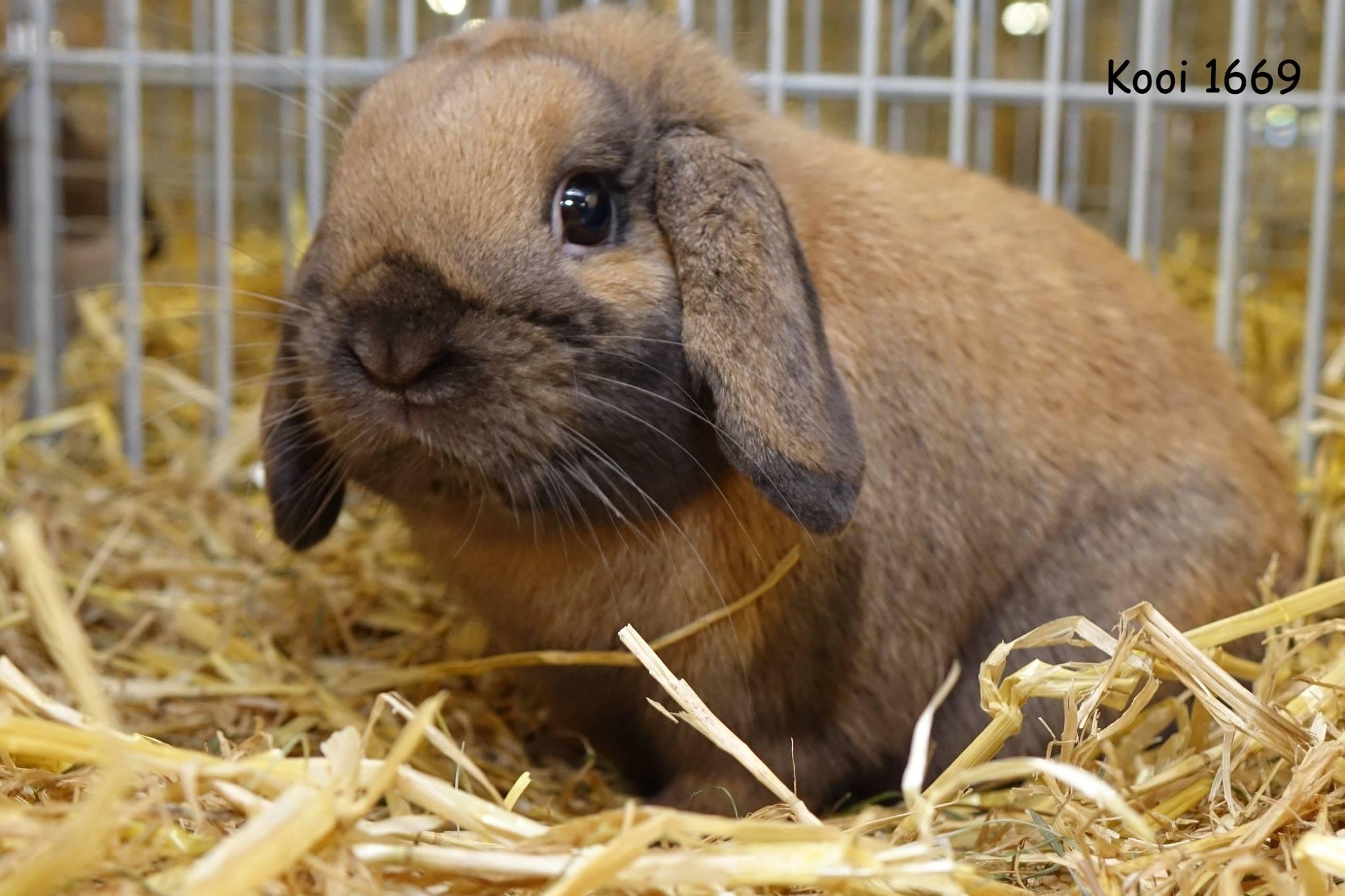 Фото кроликов баранов нашли очень