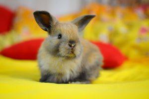 Сколько лет живут декоративные кролики