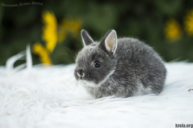 Сколько стоит декоративный кролик в Москве