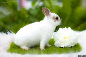 Сколько стоит декоративный кролик - цветной карлик