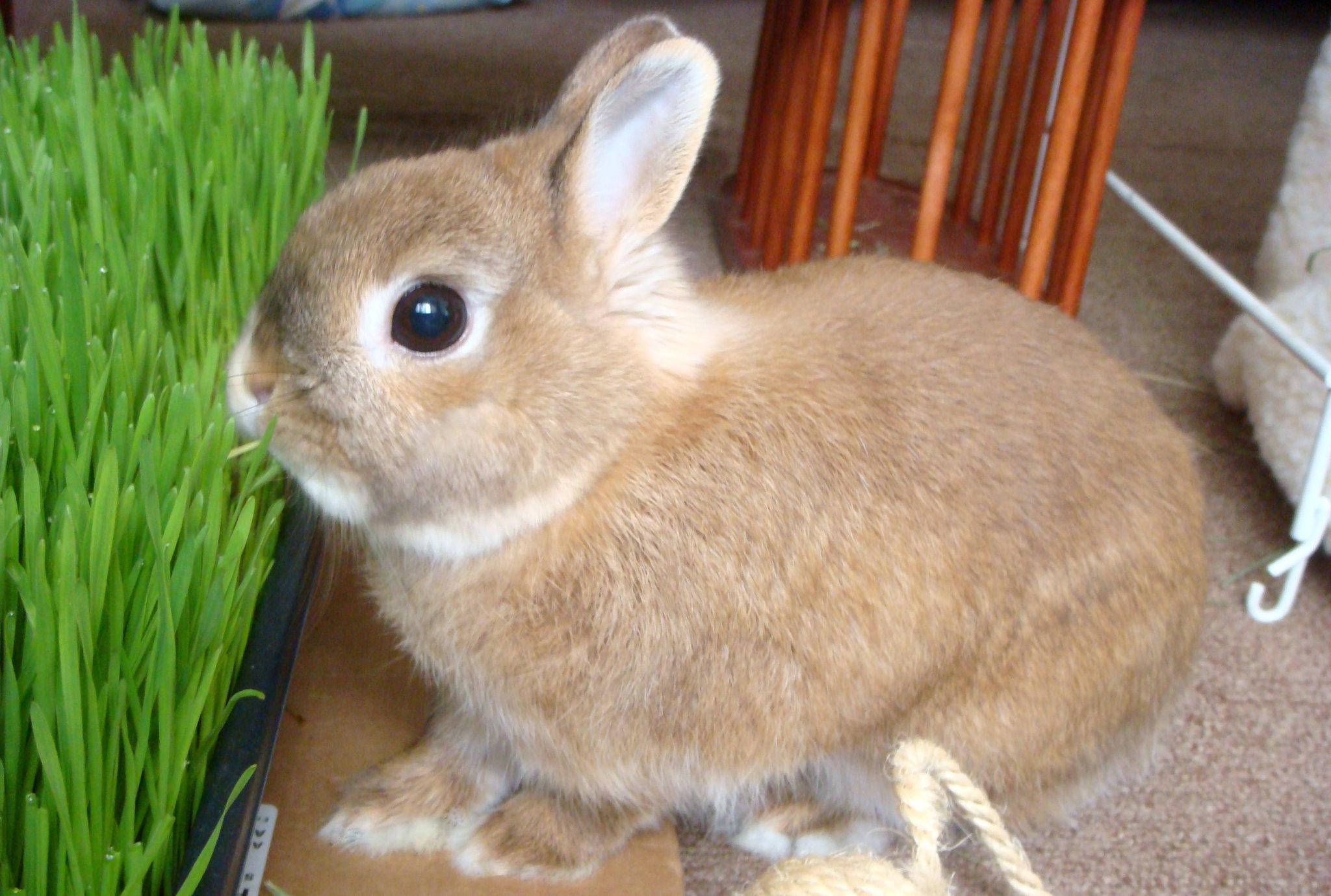 Красивый крольчонок