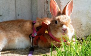 Какую траву давать кроликам