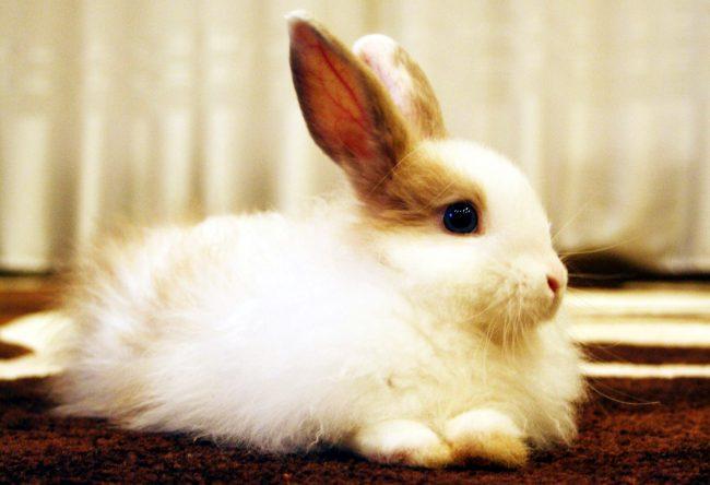 Как назвать кролика девочку