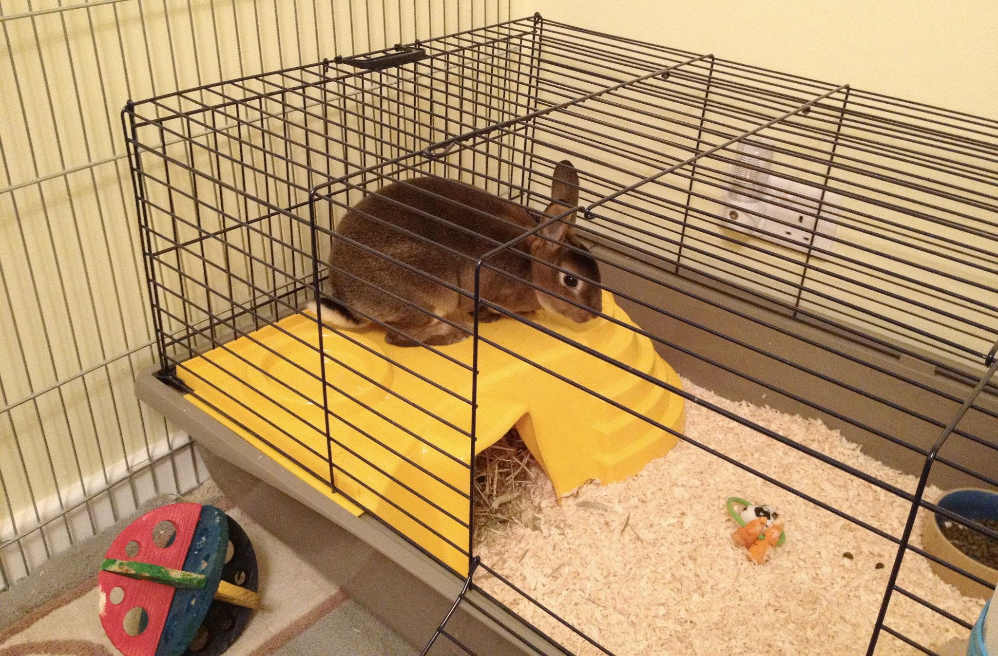 Искусственное кормление новорождённых крольчат. Кролики