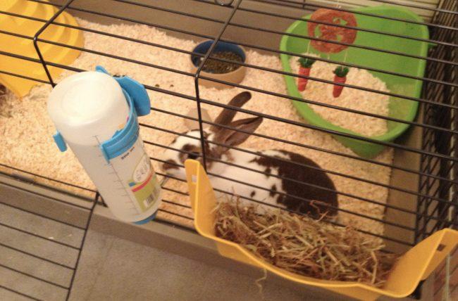 Уход и содержание декоративных кроликов - поилка
