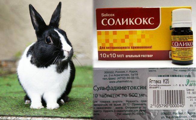 Лечение кокцидиоза у кроликов